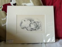 Spaniel  sleeping curled up , pencil sketch 1930's print by Lucy Dawson - Sp D26